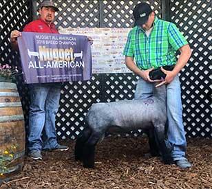 Titus Club Lambs :: Winners